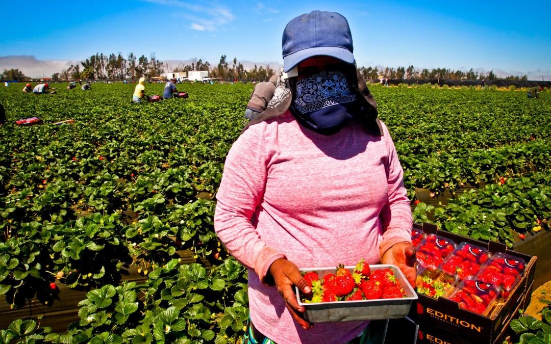 Activismo femenino que rinde sus frutos: un caso exitoso para los trabajadores agrícolas en México