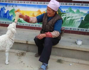 Mrs. Ma feeding sheep. Photo by Hu Wei /Oxfam