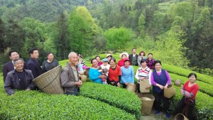 Liu Juan and other villagers picking tea leaves in early summer. Photo by by Hu Wei /Oxfam