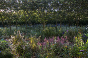 Toxin-free and natural landscapes, such as these designed by Edwina von Gal in the Hamptons, are the goal of the Perfect Earth Project. Photo credit: Rosemarie Cromwell