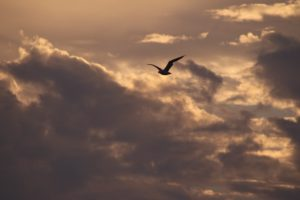 seagull-coney-island-amani-rohayyem