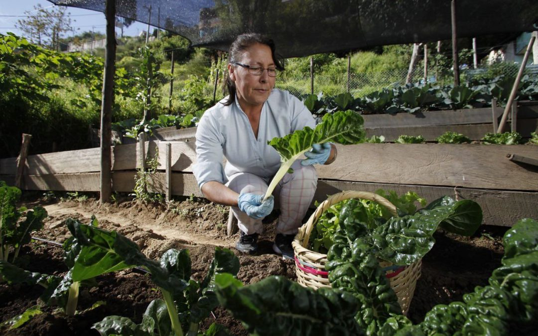 Urban Agriculture: A Viable Alternative to Wage Labor for Women in Quito